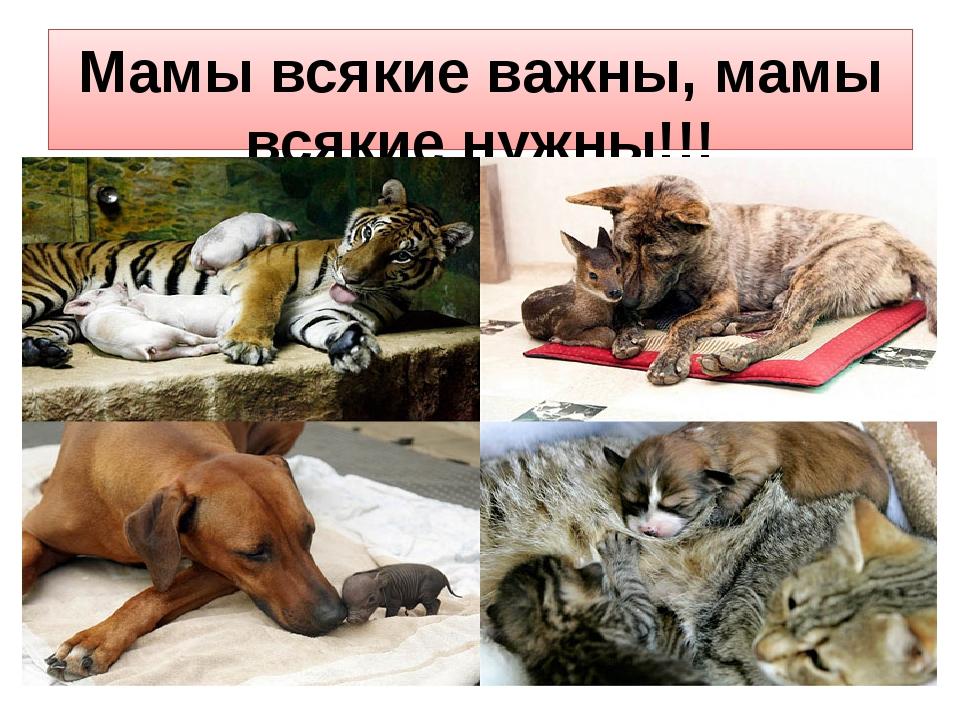 Мамы всякие важны, мамы всякие нужны!!!