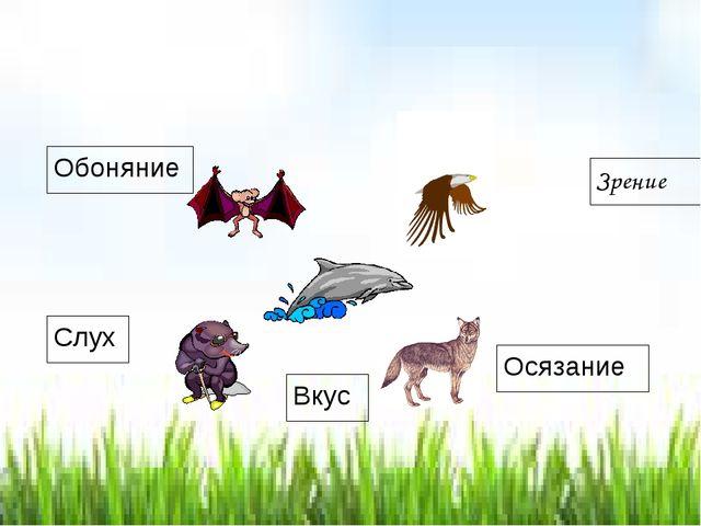Какое чувство наиболее развито у этих животных? Зрение Обоняние Слух Осязание...
