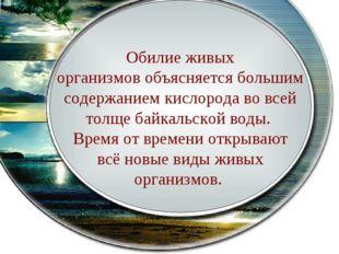 В Байкале водится более 2600 видов и разновидностей животных и более 1000 ви