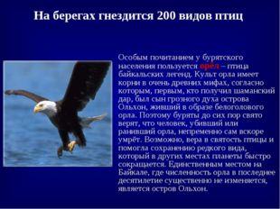 На берегах гнездится 200 видов птиц Особым почитанием у бурятского населения