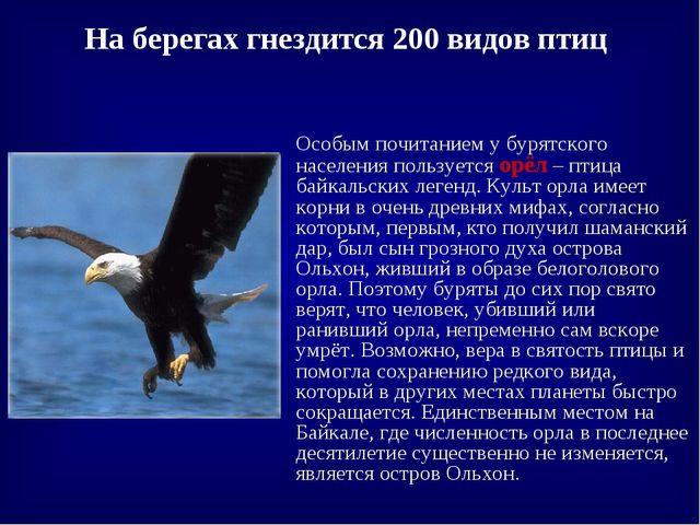 На берегах гнездится 200 видов птиц Особым почитанием у бурятского населения...