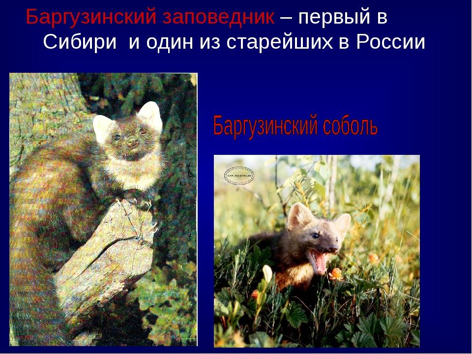 Баргузинский заповедник – первый в Сибири и один из старейших в России