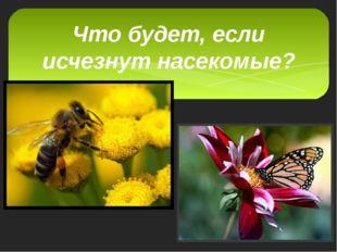 Что будет, если исчезнут насекомые?