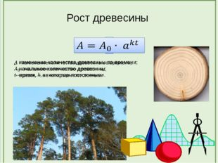 Рост древесины