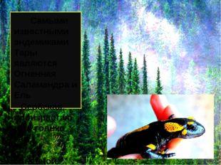 Самыми известными эндемиками Тары являются Огненная Саламандра и Ель Сербска