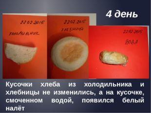 Кусочки хлеба из холодильника и хлебницы не изменились, а на кусочке, смочен