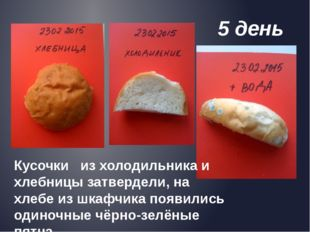 5 день Кусочки из холодильника и хлебницы затвердели, на хлебе из шкафчика п
