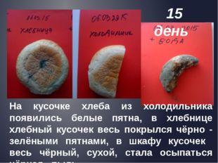 На кусочке хлеба из холодильника появились белые пятна, в хлебнице хлебный к