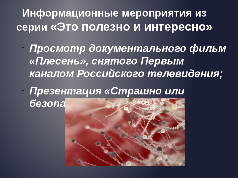 Просмотр документального фильм «Плесень», снятого Первым каналом Российского...