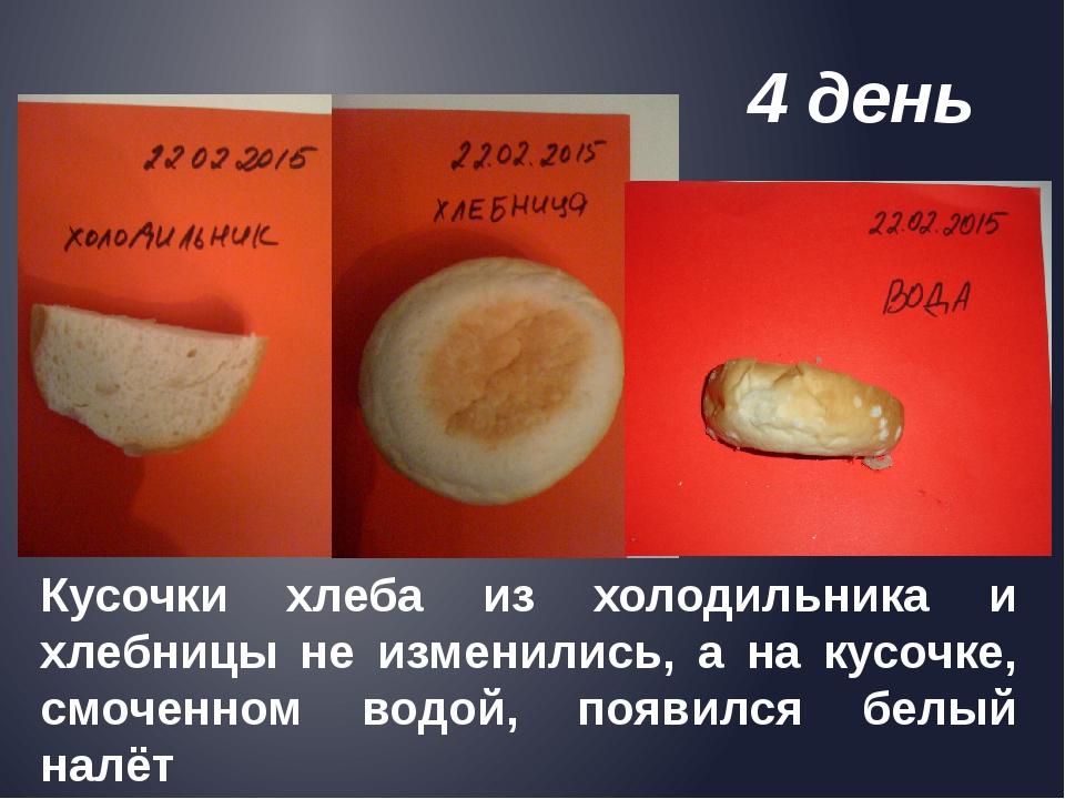 Кусочки хлеба из холодильника и хлебницы не изменились, а на кусочке, смочен...