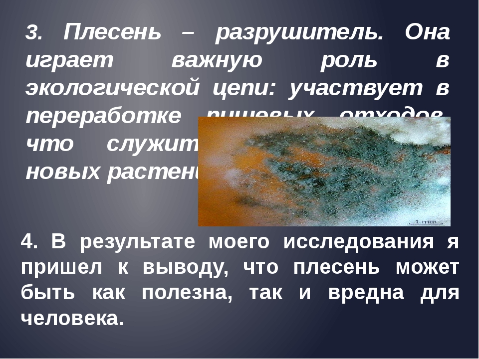 3. Плесень – разрушитель. Она играет важную роль в экологической цепи: участв...