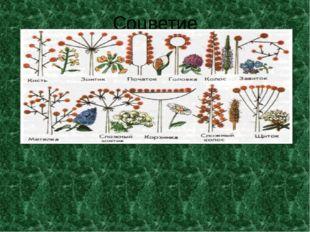 Соцветие Мелкие цветки собраны в простое соцветие злаков – колосок. Колоски,