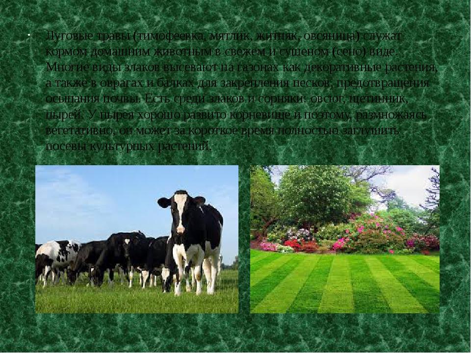 Луговые травы (тимофеевка, мятлик, житняк, овсяница) служат кормом домашним ж...