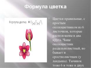 Формула цветка Цветки правильные, с простым околоцветником из 6 листочков, ко