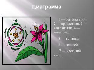 Диаграмма 1— ось соцветия, 2— прицветник, 3— чашелистик, 4— лепесток, 5—