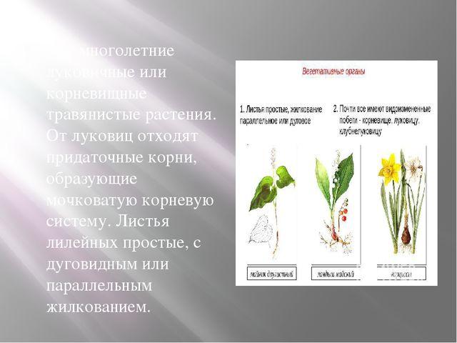 Это многолетние луковичные или корневищные травянистые растения. От луковиц...