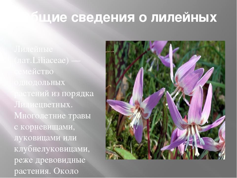 Общие сведения о лилейных Лилейные (лат.Liliaceae) — семейство однодольных ра...