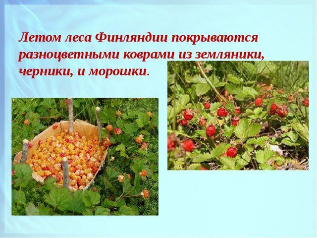 Летом леса Финляндии покрываются разноцветными коврами из земляники, черники,...