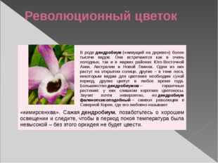 Революционный цветок Вродедендробиум(«живущий на дереве») более тысячи видо