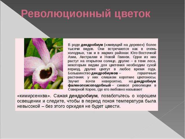 Революционный цветок Вродедендробиум(«живущий на дереве») более тысячи видо...