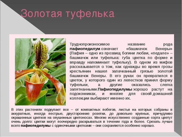 Золотая туфелька Труднопроизносимое названиеродапафиопедилумозначает «башмач...