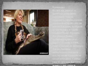 Крокодил Их всё же держат в качестве домашних питомцев. Таков, например, афри