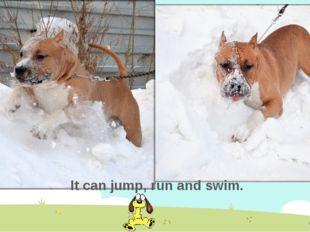 It can jump, run and swim.