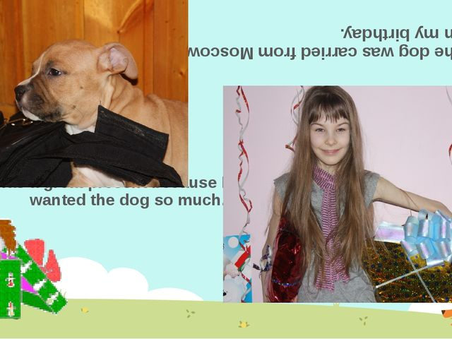 The dog was carried from Moscow on my birthday. It was a great present becaus...