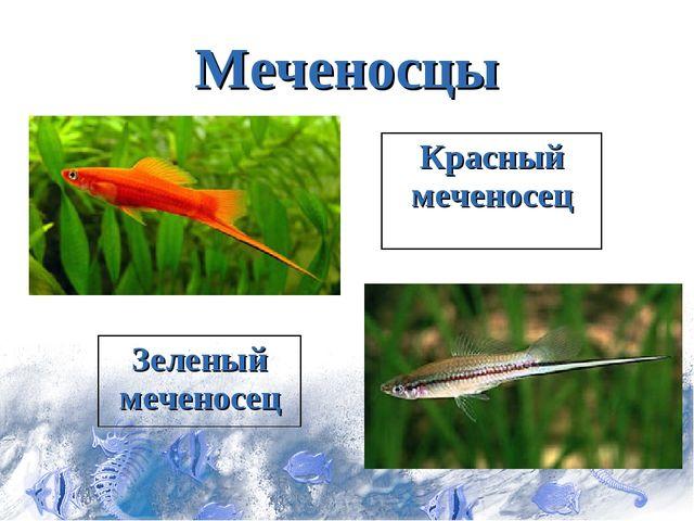 Меченосцы Красный меченосец Зеленый меченосец