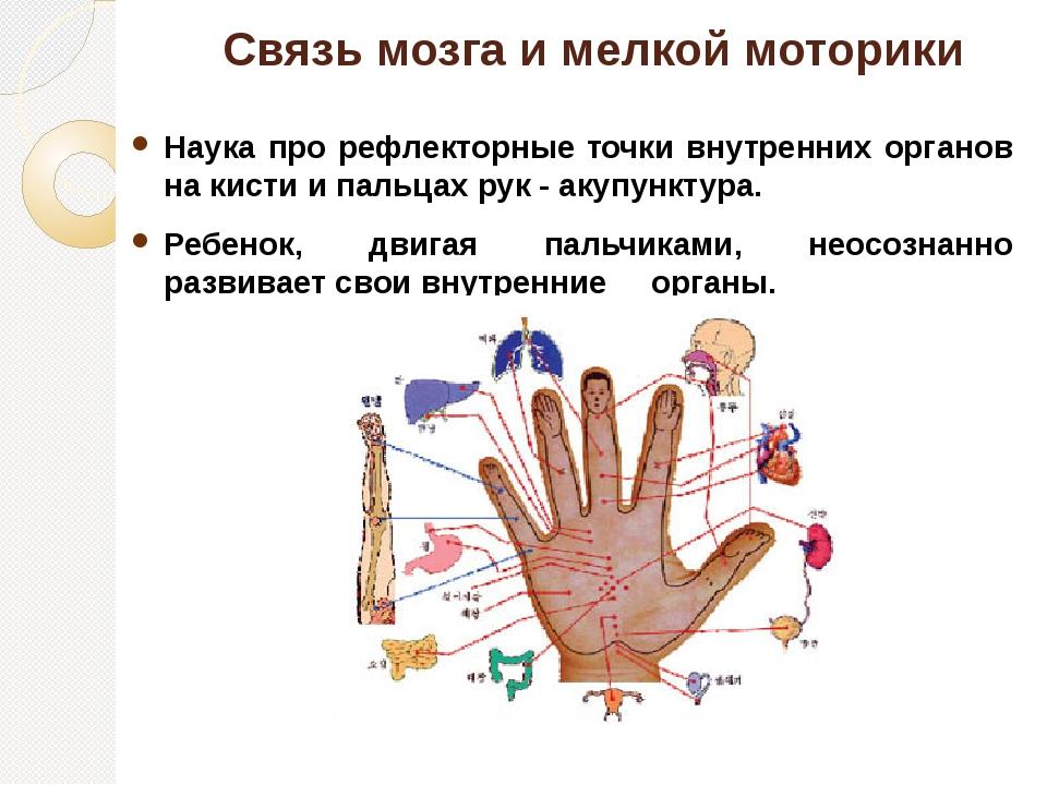 Связь мозга и мелкой моторики Наука про рефлекторные точки внутренних органов...