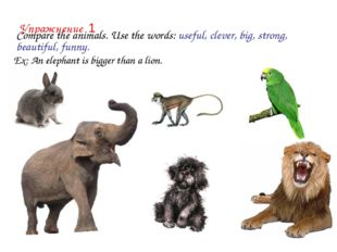 Compare the animals. Use the words: useful, clever, big, strong, beautiful,