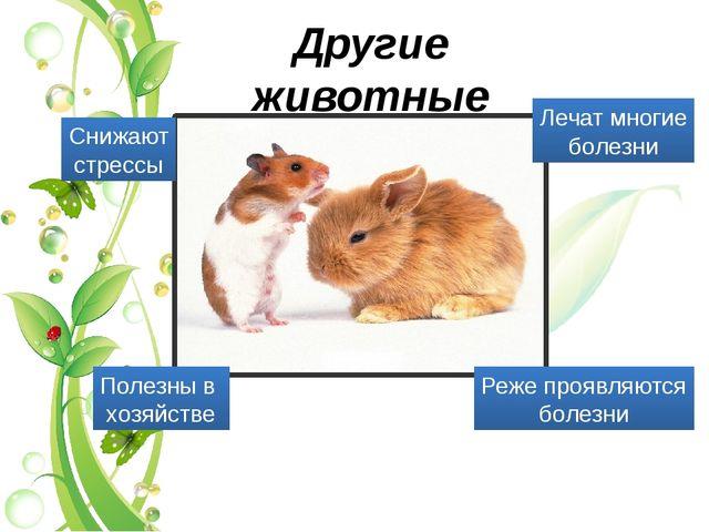 Другие животные Реже проявляются болезни Снижают стрессы Лечат многие болезни...