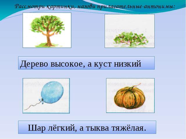 Дерево высокое, а куст низкий Шар лёгкий, а тыква тяжёлая. Рассмотри картинки...