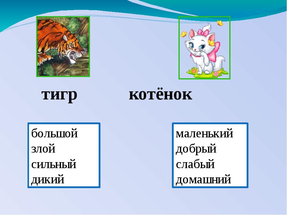 тигр котёнок большой злой сильный дикий маленький добрый слабый домашний