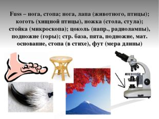 Fuss – нога, стопа; нога, лапа (животного, птицы); коготь (хищной птицы), нож