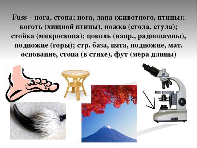 Fuss – нога, стопа; нога, лапа (животного, птицы); коготь (хищной птицы), нож...