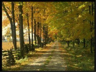 Осенью природа становиться совсем другой, особенной, не такой как другое вре
