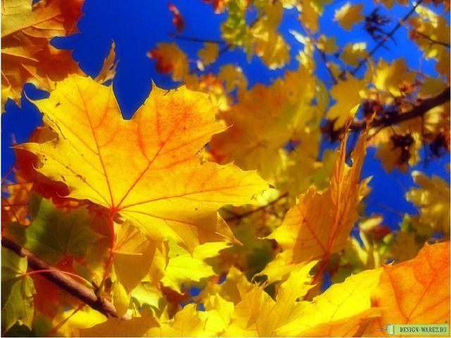 Листья становятся особого, ни с чем несравнимого цвета: