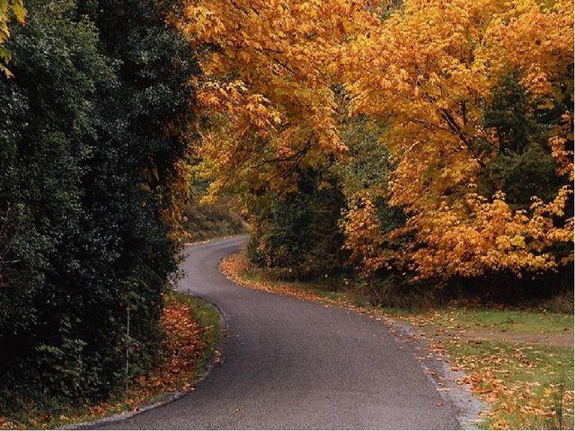 В Ливадийском парке насчитывается около 400 видов деревьев