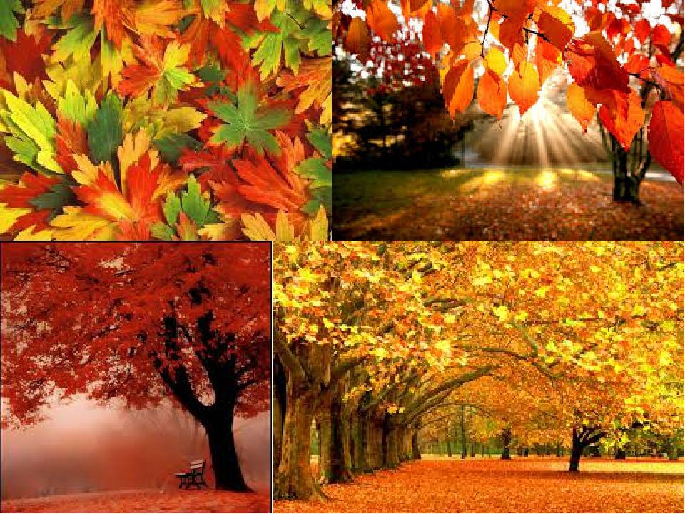 нежно-красные, бордовые, алые, сочно-зелёные, оранжевые.