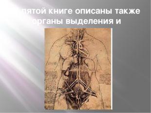 В пятой книге описаны также органы выделения и размножения