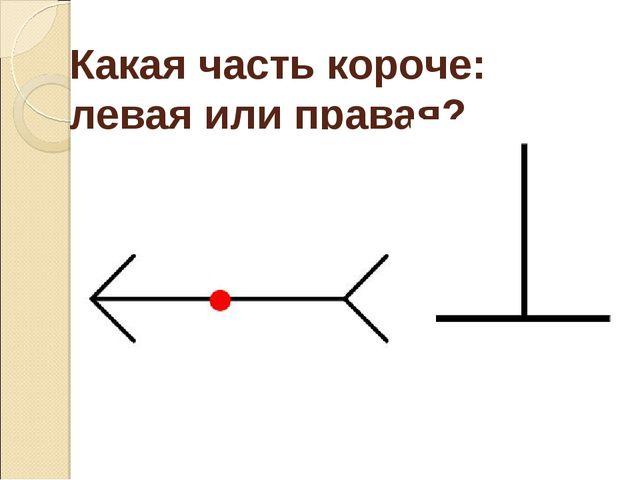 Какая часть короче: левая или правая?