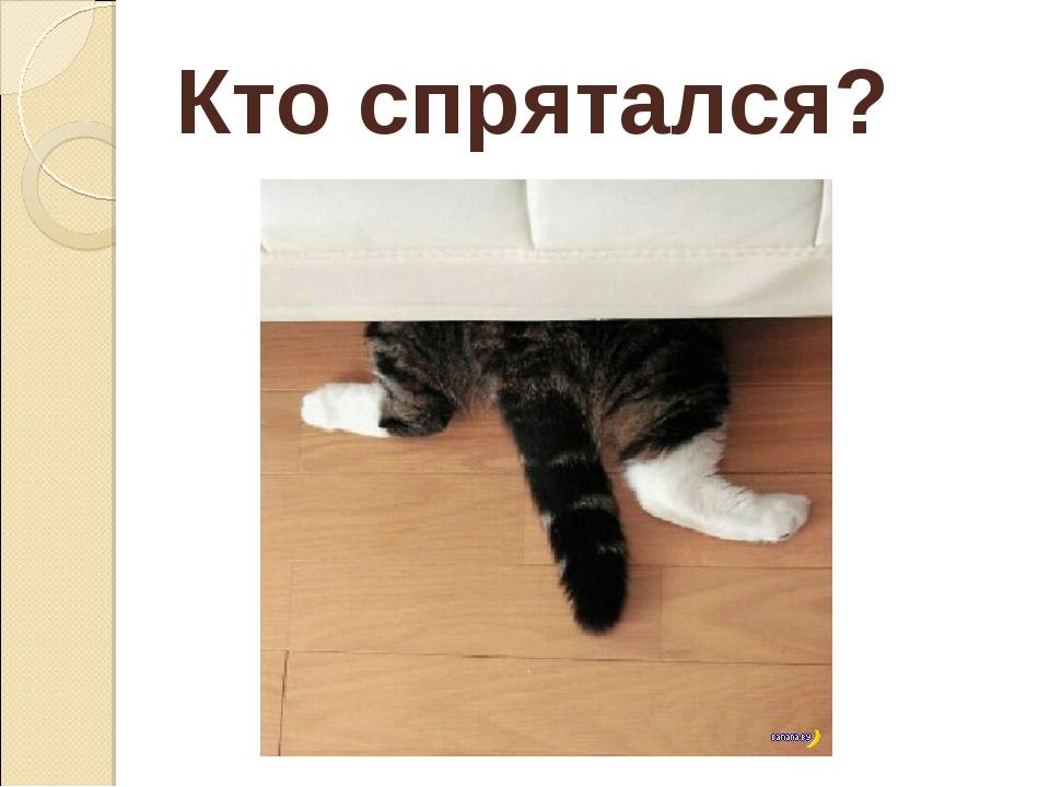 Кто спрятался?