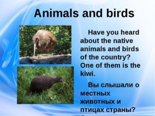 Animals and birds Have you heard about the native animals and birds of the c