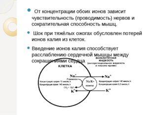 От концентрации обоих ионов зависит чувствительность (проводимость) нервов и