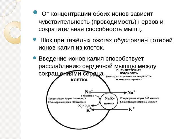 От концентрации обоих ионов зависит чувствительность (проводимость) нервов и...