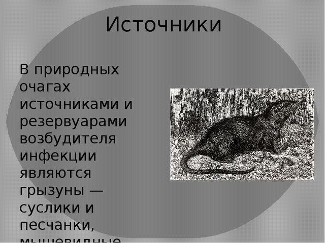 Источники В природных очагах источниками и резервуарами возбудителя инфекции...