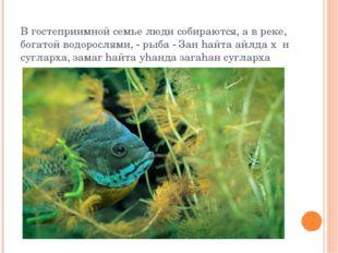 В гостеприимной семье люди собираются, а в реке, богатой водорослями, - рыба