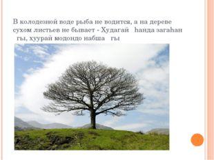 В колодезной воде рыба не водится, а на дереве сухом листьев не бывает - Худа