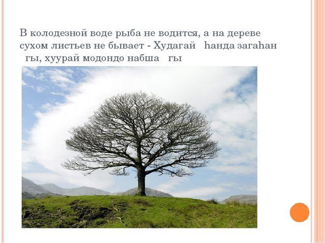 В колодезной воде рыба не водится, а на дереве сухом листьев не бывает - Худа...